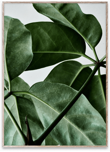 Poster Green Home 01 - 30x40cm