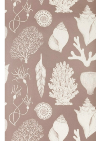 Wallpaper Katie Scott Shells - rose