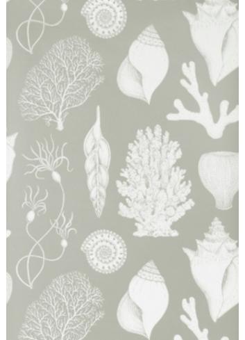Wallpaper Katie Scott Shells - aqua